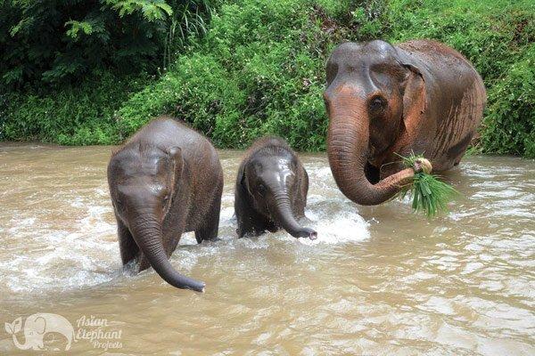 Elephant Freedom Chiang Mai elephant tour