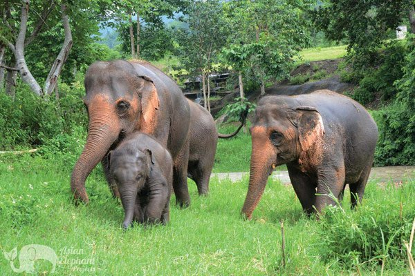Elephant Twilight elephant tour