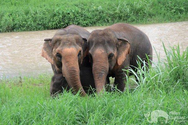 ElephantTwlight