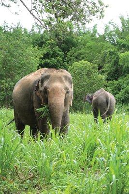 Elephant_Haven