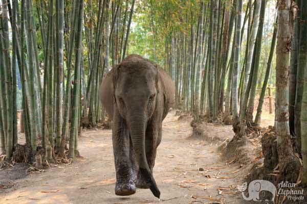 Elephant Heaven Chiang Mai elephant tour