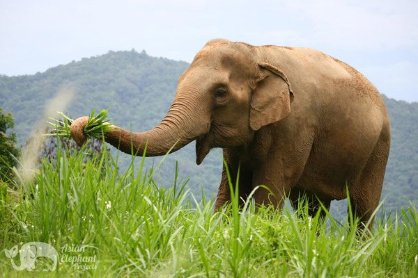 Elephant Highlands elephant sanctuary Thailand