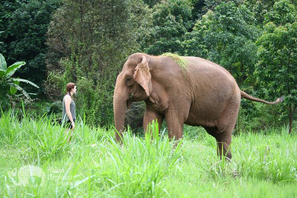 Elephant Highlands ethical elephant sanctuary