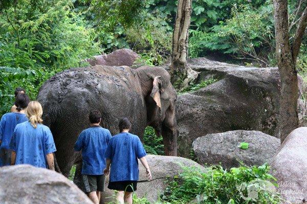 Elephant Pride Chiang Mai elephant tour