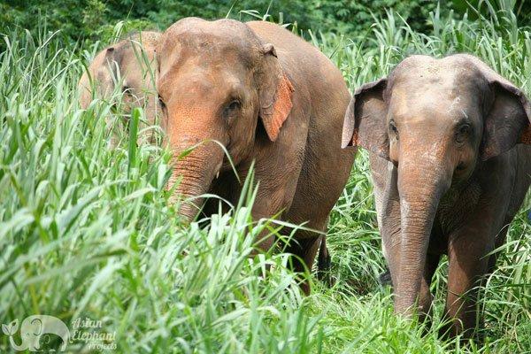 elephant sanctuary chiang mai thailand