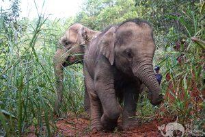 Baby elephant at Journey to Freedom