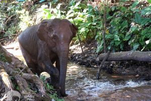 elephant expereince Thailand