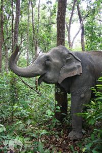 ethical elephant sanctuary near chiang mai