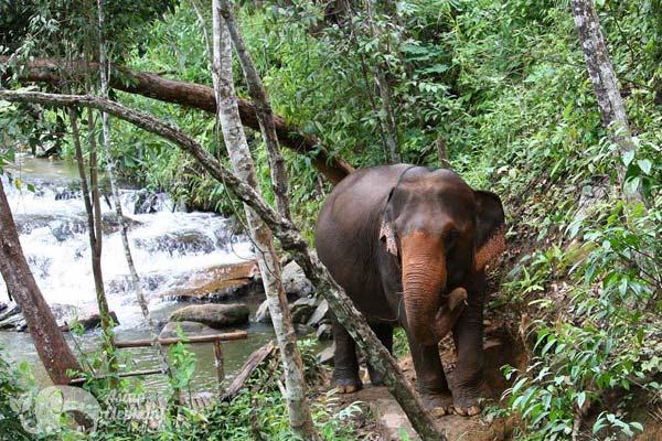Karen Elephant Experience Chiang Mai elephant tour