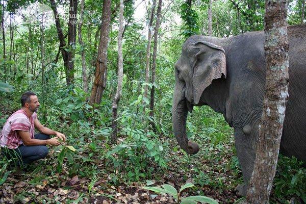 Karen Elephant Habitat elephant sanctuary