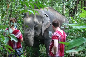 watching elephants forage in the jungle at elephant sanctuary