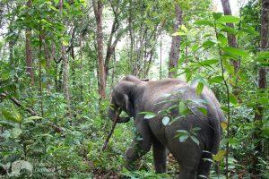elpehant sanctuary chiang mai thailand
