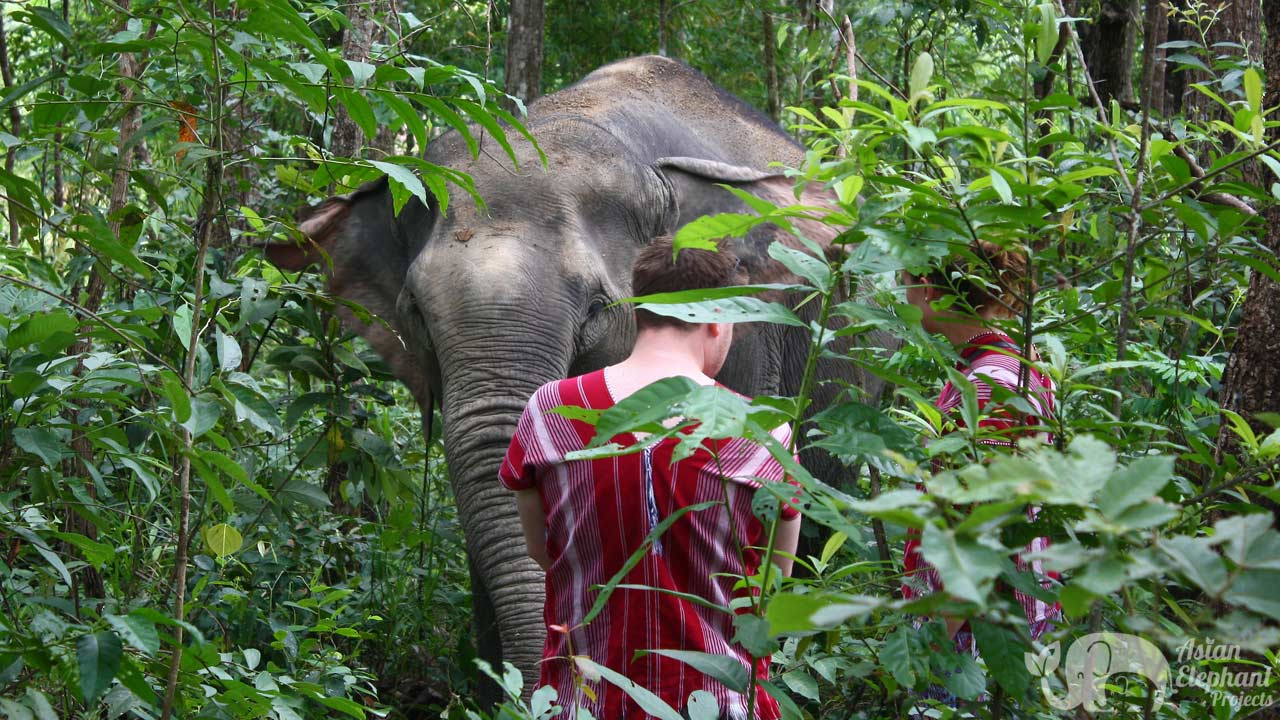 observing elephants in the jungle at Karen Elephant Habitat