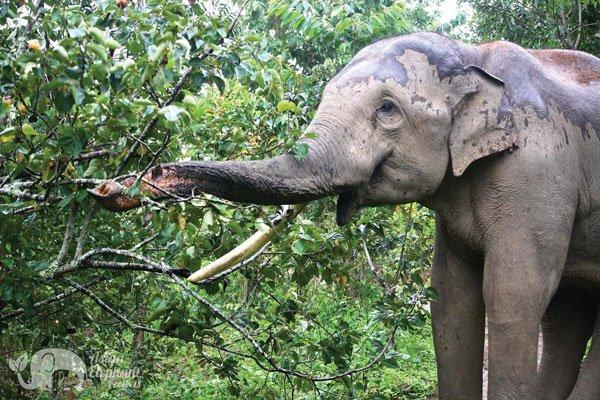 Karen Elephant Home Chiang Mai elephant tour