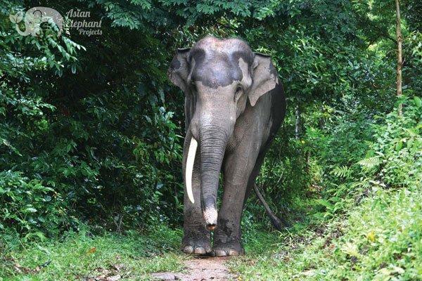 Karen Elephant Home elephant sanctuary Thailand
