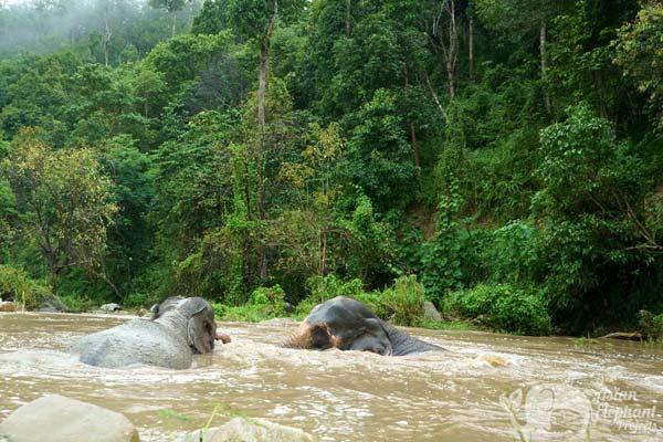 Karen Elephant Oasis elephant sanctuary Thailand