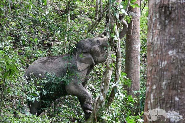 Karen Elephant Oasis elephant tour