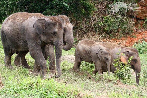 Elephant Elephant Reserve elephant sanctuary Thailand