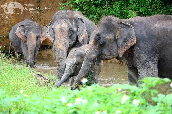 Karen Elephant Retreat elephant tour Chiang Mai