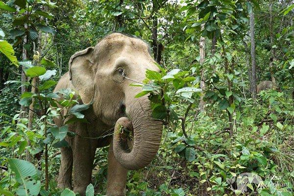 Karen Elephant Serenity Chiang Mai elephant tour