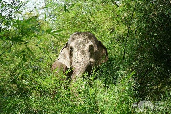 Karen Elephant Serenity elephant sanctuary