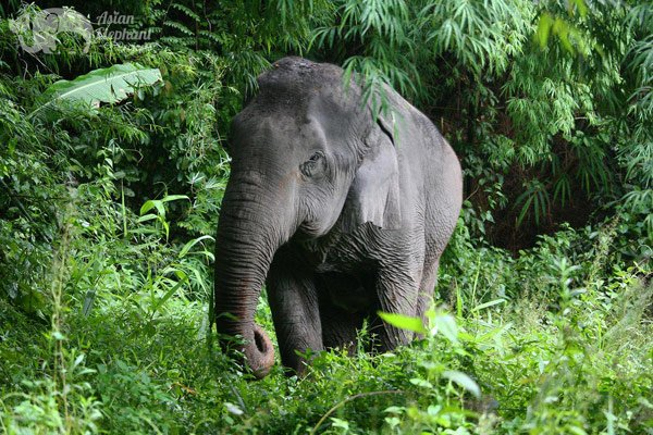 Pamper a Pachyderm Chiang Mai elephant sanctuary
