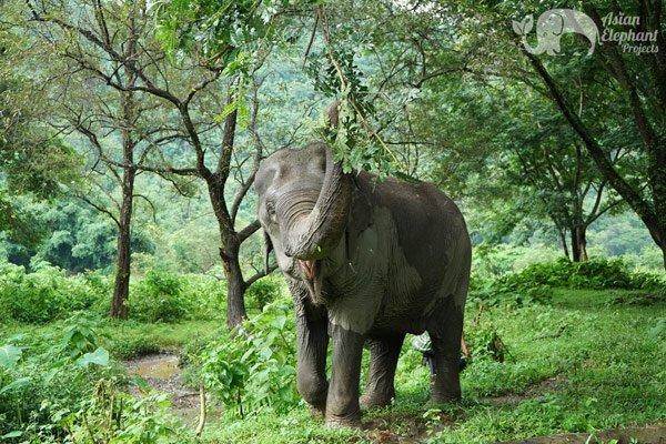 Pamper a Pachyderm elephant tour