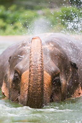 Samui_Elephant_Sanctuary