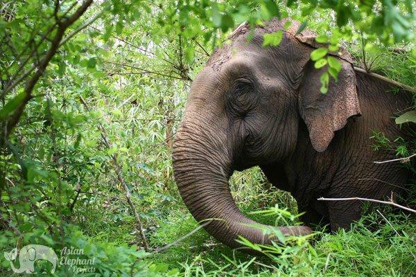 elephant foraging at elephant sanctuary