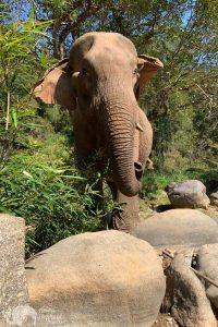 Elephant_Pride