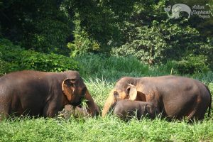 Elephant Twlight Herd