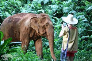 chiang mai elephant tour Elephant Delight