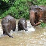 elephant family at elephant sanctuary Thailand