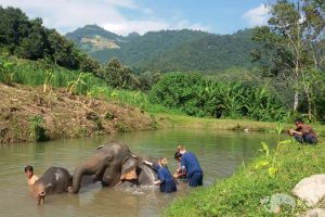 elephant wellness asian elephant projects elephant sanctuary chiang mai