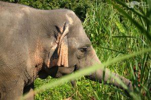 elephant wellness asian elephant projects elephant sanctuary chiang mai