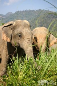 Elephant friends at elephant wellness