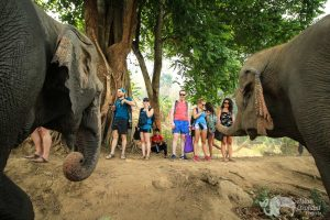 observing elephants at elephant sanctuary thailand