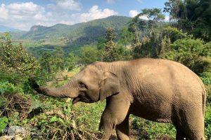 elephant green hill