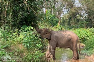 elephant foraging at elephant heaven