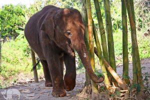 elephant heaven chiang mai thailand
