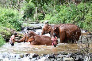 Karen Elephant Experience elephant sanctuary