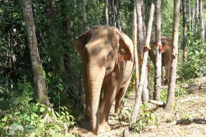 walking with elephants at Karen Elephant Experience