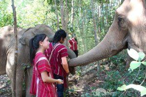 observing elephants at elephant sanctuary