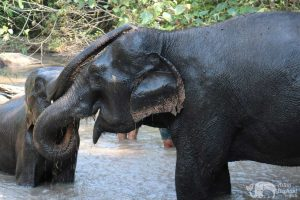 elephants interacting at Karen Elephant Habitat elephant sanctuary