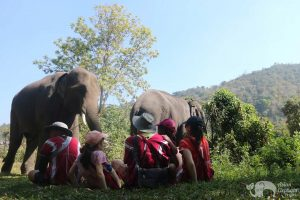 watching elephant on elephant tour chiang mai