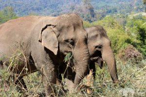 elephants friends at elephant sanctuary