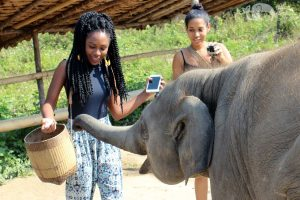 feeding elephants at Karen Elephant Retirement sanctuary