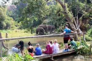 observing elephants at elephants sanctuary near chiang mai