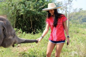 feeding elephants bananas at elephant sanctuary thailand