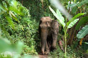 Asian Elephant Projects - Love for Elephants
